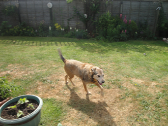 Dog Walks Tibenham